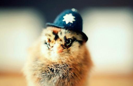 可愛い警察官ですね〜。